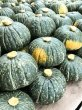 画像3: みやこかぼちゃ 5kg(露地トンネル栽培) (3)